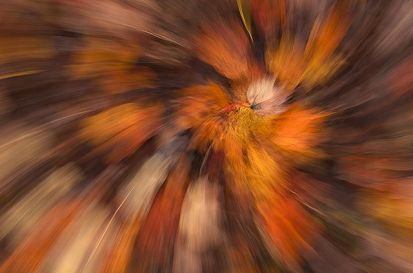 Abstract Fall Color Leaves Swirl, Big South Fork National Recreation Area, Tennessee